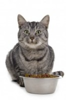 Cat With Food 2c4cb13f2d22af2c3dd48d7bfeccfe25