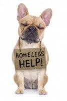 Homeless Dog 18e2305981dca6ed8e9e42599185bf69