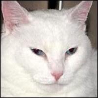 PP Old Cat 2 372e867c8f525d70fb697c373d212d36