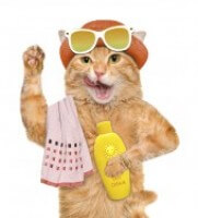 Summer Cat 1929a0ac02381fa52b7da4c9dd7aceb3