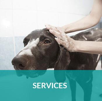Veterinary_Services