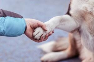 Adopt An Older Pet A00ed141ae95fdbf2f51e6fac060aad5
