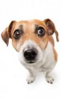Anxious Dog Ff6b0fe2c88a35695279e5ab47da29fd