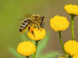 Bee F589df641e48a3a05de47348e23d85c0