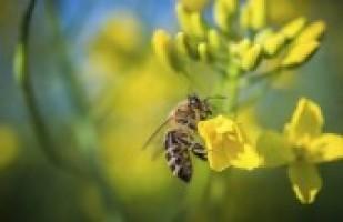 Bees Fdb86df1414a18b0764490a0c6e0e6b8