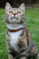 Cat 1 73cb51c206e4bd5b3731506eeac15c5c