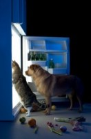 Cat And Dog In Fridge 5ea8cb621dc237ea63b60b76ef58a4d2