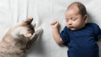 Cat And Toddler 47d2ac4ae74823fd737a67e014690cb7