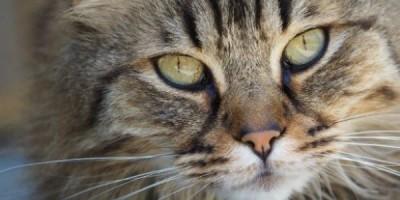 Cat Closeup 90ef941ec2cb663554f64cf6897a1607
