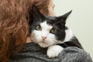 Cat Cuddles Aba3c5b5d6a5e4e44f3d1ea1741a20e8