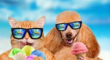 Cat Dog Sunscreen 56e2f04c1a8a84df81da9d88b46397c0
