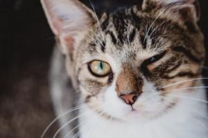 Cat Eye Dbc71900b96650f1fb68dc4441bd2a03