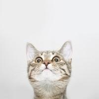 Cat Head E89107a4ac06fc3e7411ee1358821f11