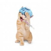 Cat Headache 0a4232261e175276de9194353ca2f99d