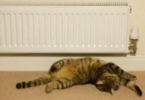 Cat Heater Aad74226e928730d83b928cb6e109993