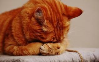Cat Hiding Face 770cd293096d4c8558e5f235aeda3f42