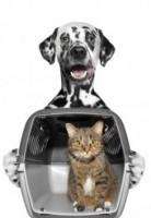 Cat In Carrier 4e44cd5f443293ed8e673f7926224301