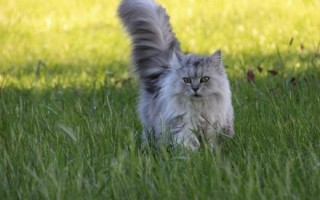 Cat In Long Grass 5da25d84058bb528478dd7398971a813