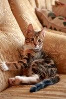 Cat On Couch 8b4497676b538800d142f66f7f0fd599