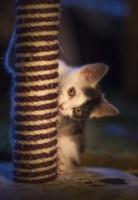 Cat Scratching Post 1e79cc3f3224e91e63f650504e7ef61a