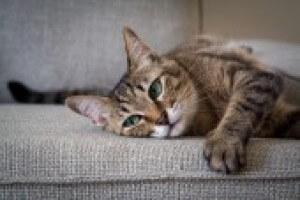 Cat Sleepy 061e8759e3884481bcf042fcac96fa1f