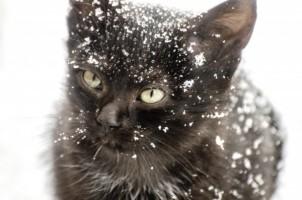 Cat Snow 620c8419f8d6541d925af4da01f5568c