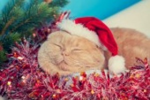 Cat Tinsel 7927742619fa925c8e778d30658b4e86