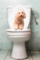 Cat Toilet 474a93b2c0a431a8139acfdfdd9cfdae