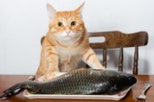 Cat With Fish 48684e10bf738b7cecf249f007e5d1bc