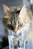 Cat With Glass 35bf294e7c99a635792c9504cadd2261