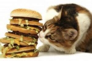 Cat With Hamburgers 6618ff393095bee7e52d6e07520ab91c