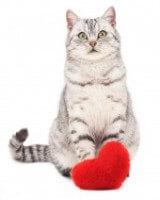 Cat With Heart A15acec1e118d89d4f76cb66e4ee2663
