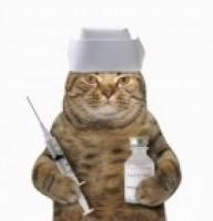 Cat With Needle 3938c2d008c2ae979c68b5e8d32f89e6
