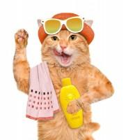 Cat With Towel D132a3a547efd3de254b9aeeaf2b6735