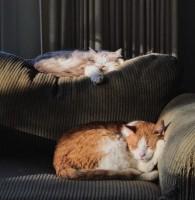 Cats In The Sun Ef697e2a6a9aadff6b48b8e6eb2e6c49