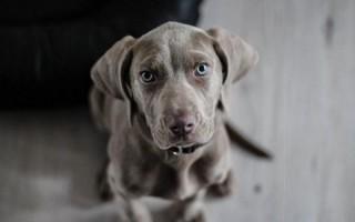 Cute Dog 303880d33a39704bf09b3bb03ede3c03