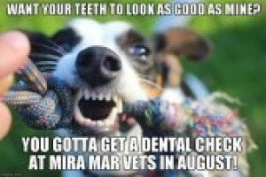 Dental Dog 626660ca3e82082c481d3916ed08e89e
