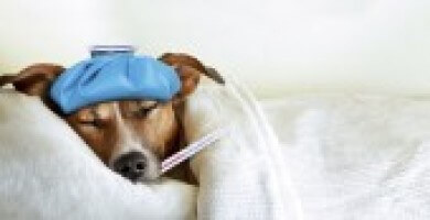 Dog Flu C6ca9b551ae706ccfed39f000be81468