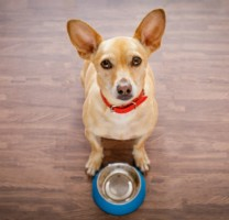 Dog Food Bowl 76ef001c15896f51db23ab27ef92d33e