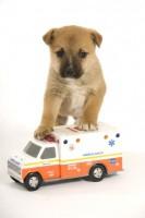 Dog Ambulance 2fcbc1816f87cc95fdcd4735986c4eb5