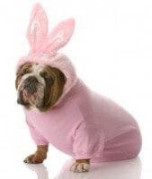Dog Easter Ears 8821e6a8461553803cd62855f2cb03af
