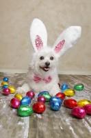 Dog Easter Eggs 1 Aef83e2b0f9b2186e66a164a697a6691