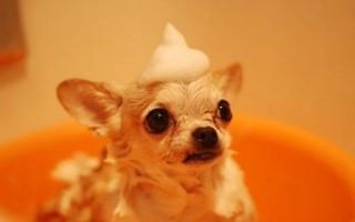 Dog In Bath Ab51148db924830aebf381e3afad1b7d