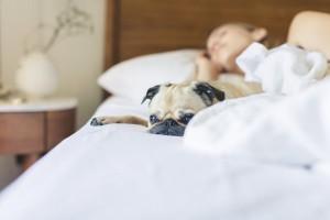 Dog In Bed B9a654ca151858f7a2475f36a6294f97