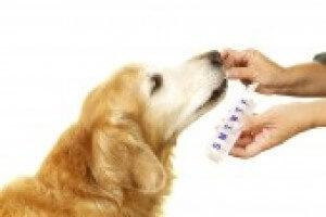 Dog Liquid Medication E7b53f6842b71f8193807a157724a158