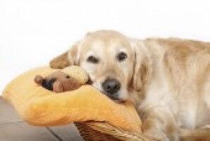 Dog On Bed Ec6e8d8c1a1919de08dfd454b47a1394