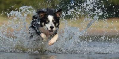 Dog Running Through Water 8ac658ddf172fa10638d00f3ea1f7d08