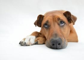 Dog Sad 1bd56db8c28bee7fc62c99cf92db4111