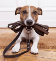 Dog Training Bfad0032631db53bb1e5996ea0b51c36