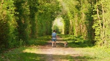 Dog Walking Mental Health 6c4bdcb441fad5cd7960db4a4655ee5a